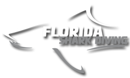 Florida Shark Diving