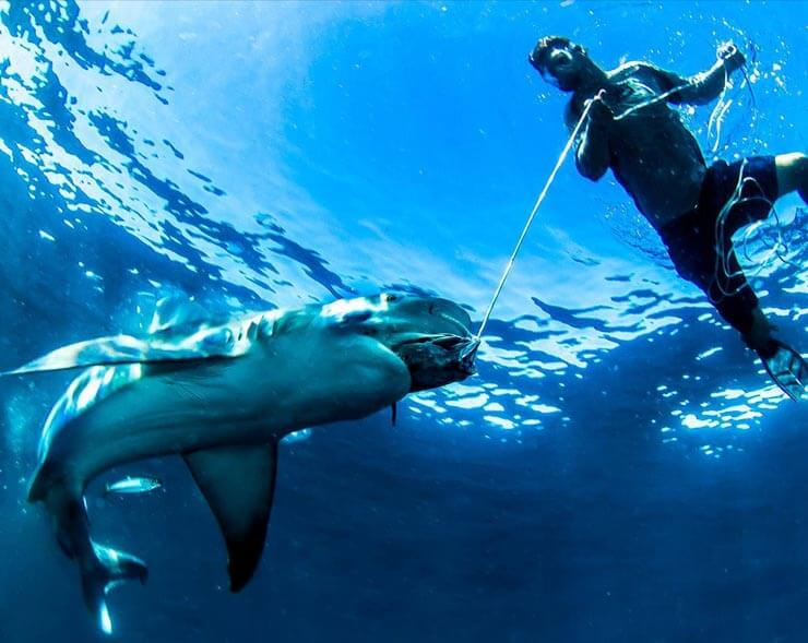 An image of our Shark Wranglers feeding one of Florida's sharks by hand!