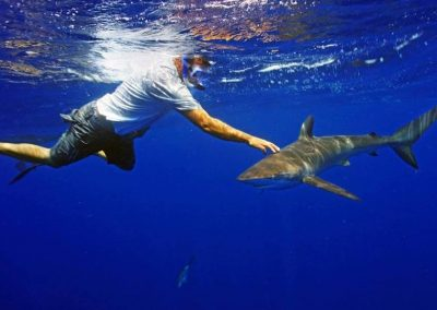 A diver reaches out to touch a shark on a Florida Shark Diving tour.