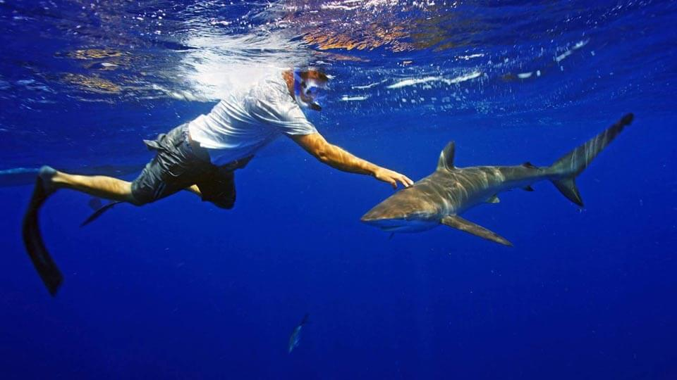 Shark Diving Trips Daily Cage Amp Freedive Adventures With