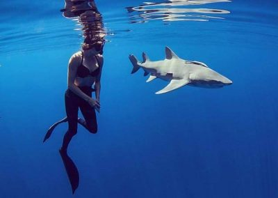 Diver and shark get up close and personal safely with the help of Florida Shark Diving!