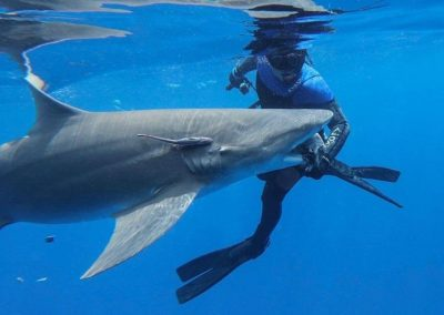 Diver hand feeds a shark on a Florida Shark Diving adventure.
