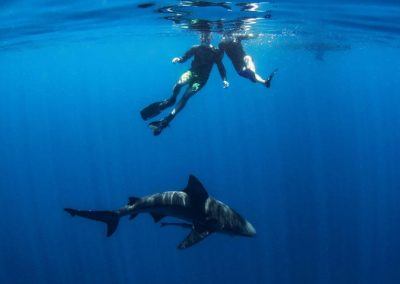 Two divers get up close and personal with a shark off the coast of Florida.