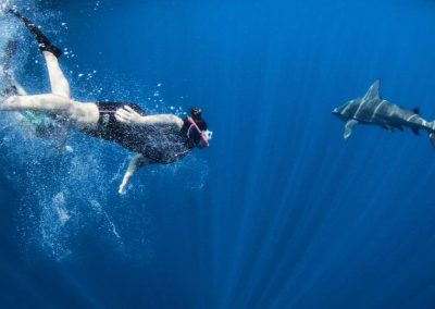 A freediver comes up close and personal with a shark on a Florida Shark Diving trip.