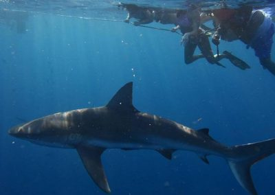 Join us for a Florida Shark Diving Trip!