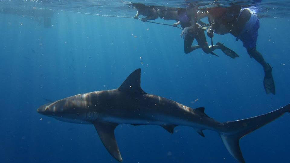 Make a memorable experience even better with photos and videos of your shark dive with Florida Shark Diving.