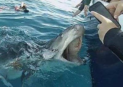 Join us for a Shark Viewing Trip today!