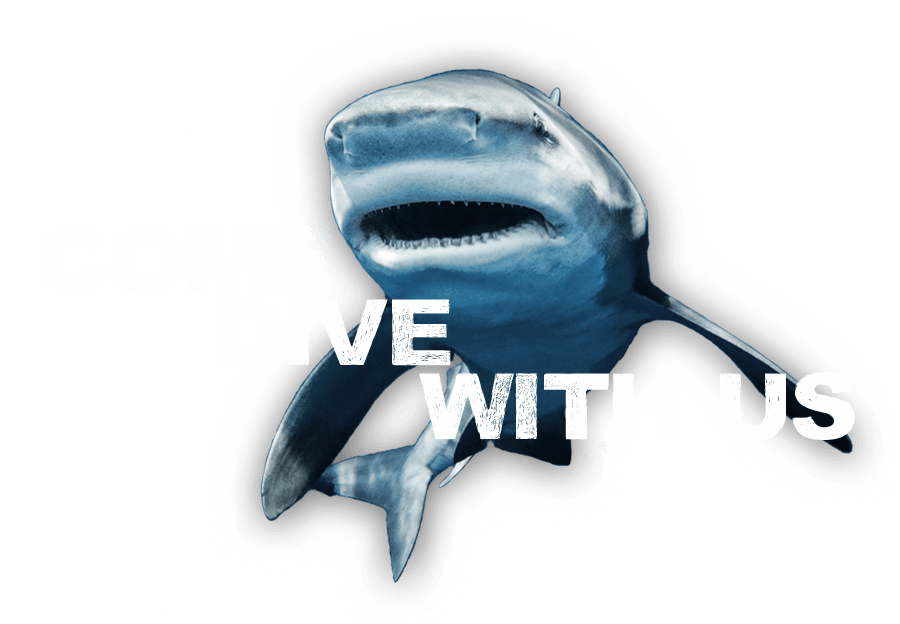 An image of a friendly shark inviting you to Come Dive with Us at Florida Shark Diving!