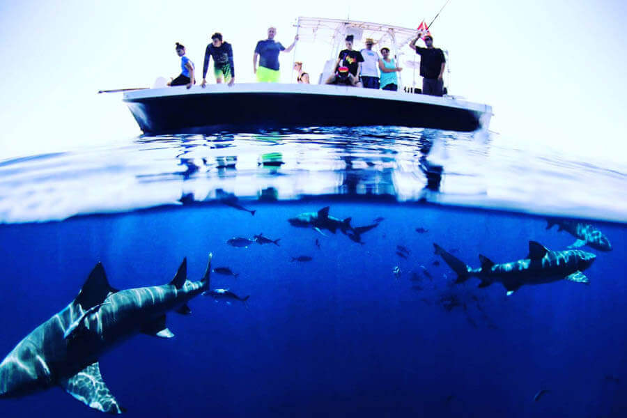 Join us for a Florida Shark Viewing Trip. An image of a shark viewing adventure with Florida Shark Diving off of Florida's East Coast.