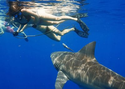 An image of a woman in the ocean with a shark of florida.