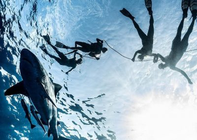 An image of open ocean diving with sharks taken from below the divers.