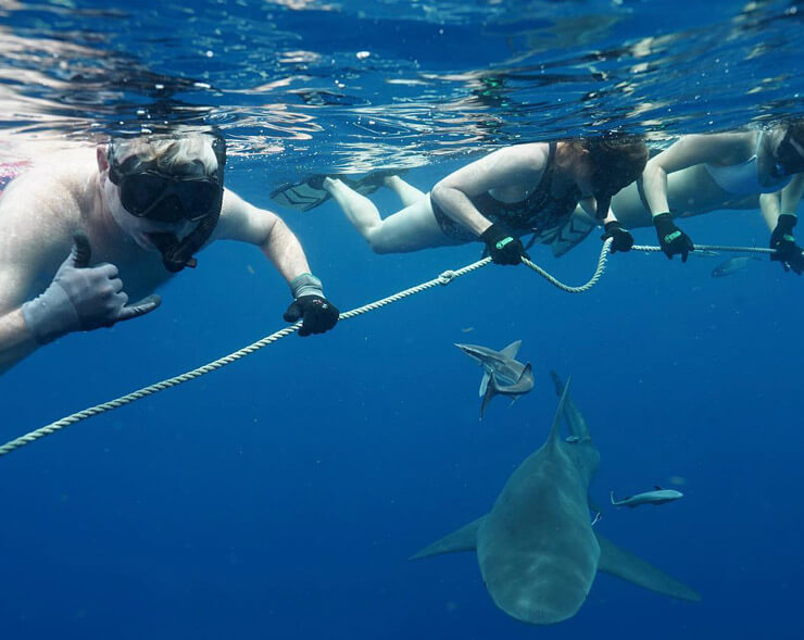 An image of our guests in the water with sharks aboard a Florida Shark Tour with Florida Shark Diving.